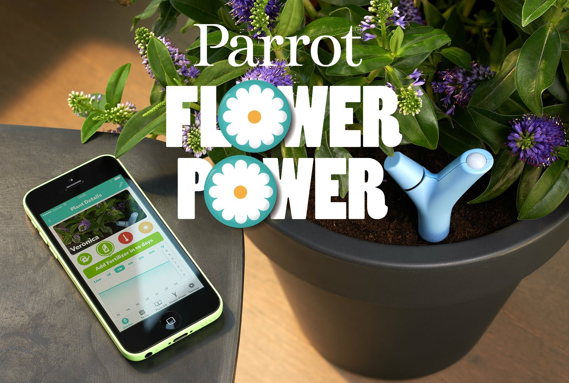 The Power Flower Parrot